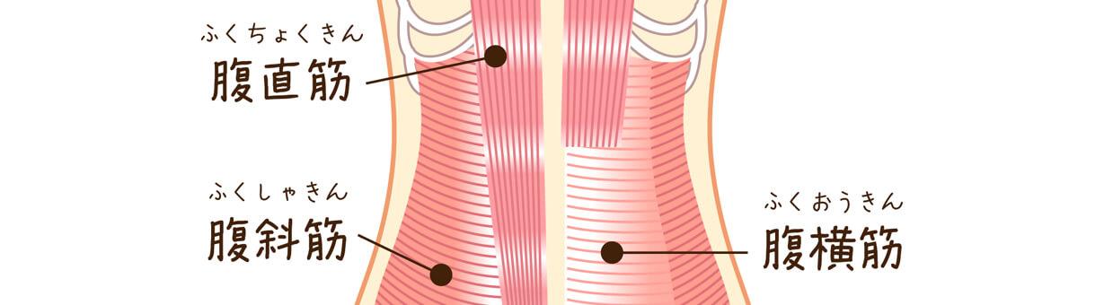 3種類の腹筋に関連する筋肉をバルクアップ出来る筋トレメニューを