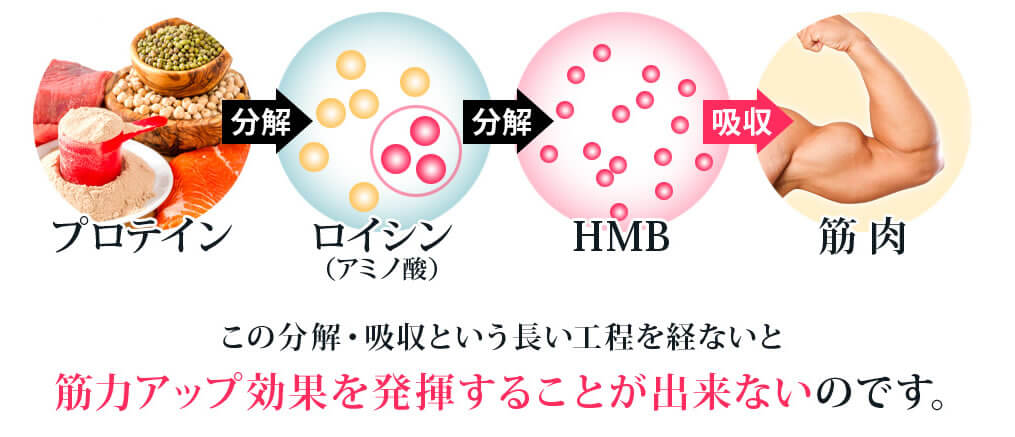キレマッスルの筋肉増強の源『HMB』